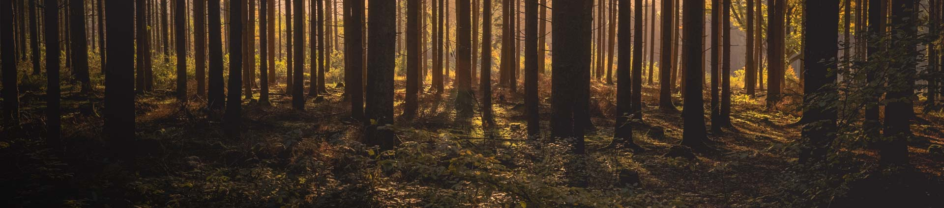 header-forestry-investment